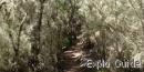 Garajonay National Park, La Gomera Island