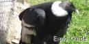 Mifafi condor refuge, Merida