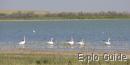 Naurzum State Nature Reserve