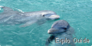 Snorkeling and swimming with dolphins, Las Brujas, Cayo Santa Maria