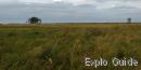 Pulgoja at Luitemaa Nature reserve, Häädemeeste vald, Pärnu