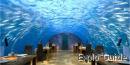 Ithaa Underwater Restaurant,  Alif Dhaal Atoll