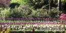 Madrid Botanic Garden, Retiro park
