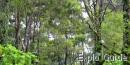 Singapore Botanic Garden, Bukit Timah