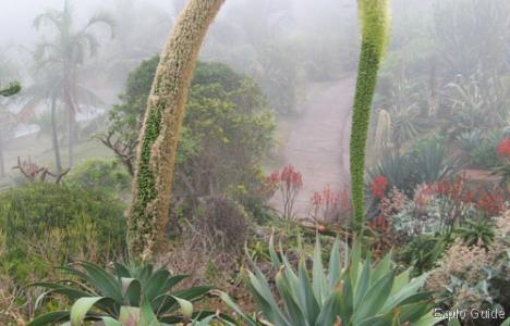 Botanic Conservatory of Mascarin , Réunion Island