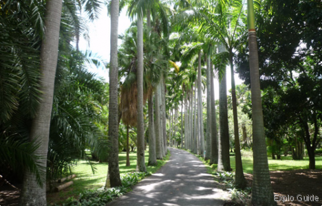 Botanical garden of Caracas