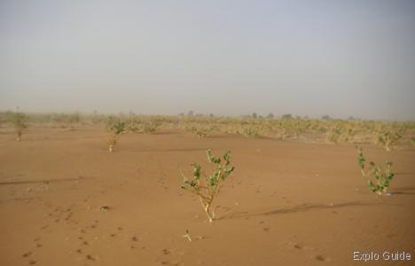 Chgaga dunes, Mhamid